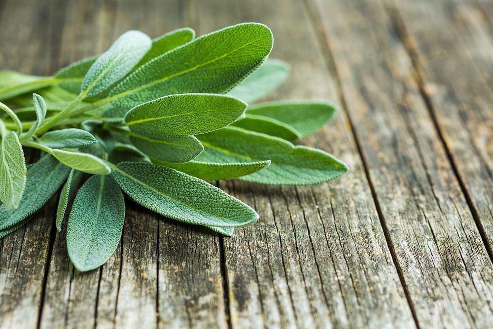 Szałwia jest dobrym wsparciem organizmu walczącego z infekcją i zakażeniem. Na przeziębienie, a szczególnie infekcje górnych dróg oddechowych, polecane jest np. picie naparu z szałwii.