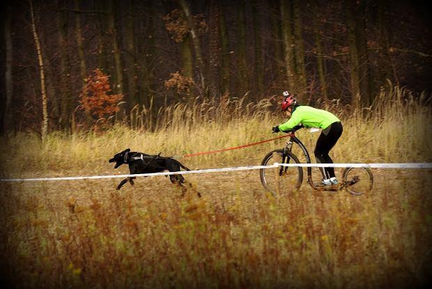 Wyścigi psich zaprzęgów - Ślonsko Maras Gonitwa