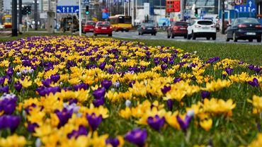 Zarząd Oczyszczania Miasta szykuje już Warszawę na kolejną wiosnę
