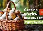 Sezon grzybowy rozpoczęty! Ruszamy z akcją #grzyby2020