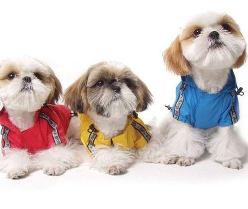 Psy wpatrzone w telewizor?:)
