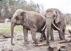 Rosjanie windowali frekwencję w zoo. Ale już nie przyjeżdżają