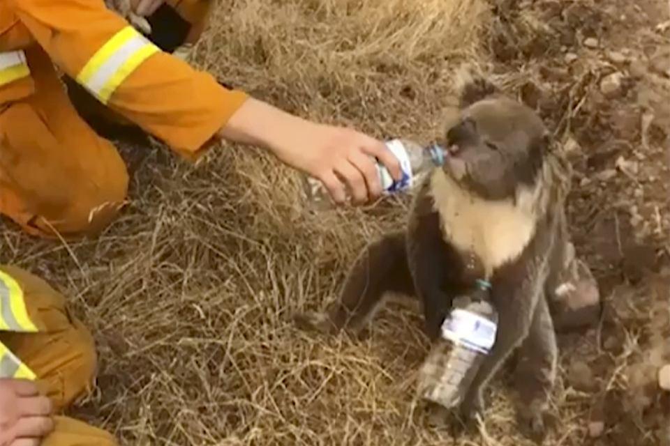 Znalezione obrazy dla zapytania australia zwierzęta