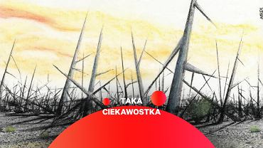 'Cierniowy krajobraz' - grafika pokazująca proponowane granitowe słupy odstraszające od składowiska odpadów jądrowych