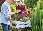 Praca w ogrodzie przynosi takie korzyści zdrowotne jak ćwiczenia na siłowni - twierdzą amerykańscy naukowcy