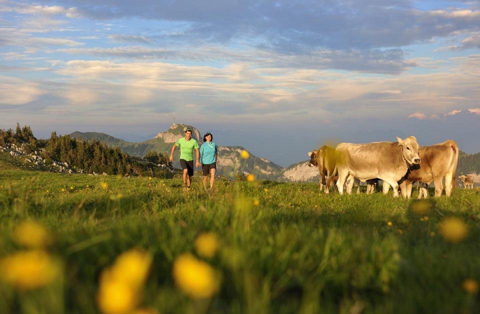 W jaki sposób zachowywać się, przechodząc przez pastwiska? Zamknąć za sobą bramę i iść spokojnie szlakiem. Jeśli stoi na nim stado krów - ominąć je dookoła; jeśli parskają, ryczą - oddalić się powoli