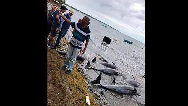 Delfiny giną przez osiadły na mieliźnie tankowiec