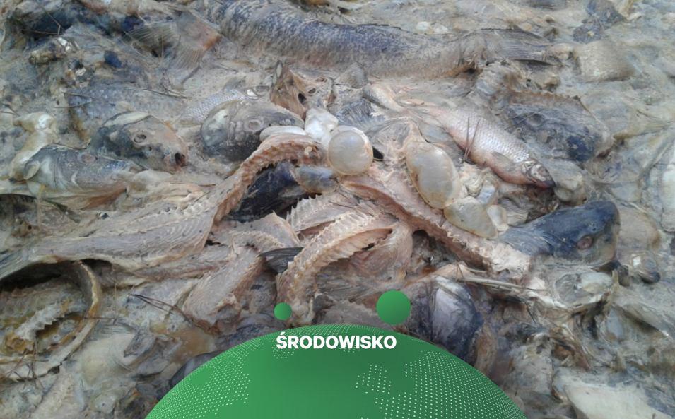 700 kg ryb porzuconych w lesie na Pomorzu