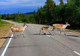 Uwaga na zwierzęta na drodze!