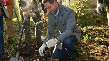 Patryk Jaki podczas akcji sadzenia drzew