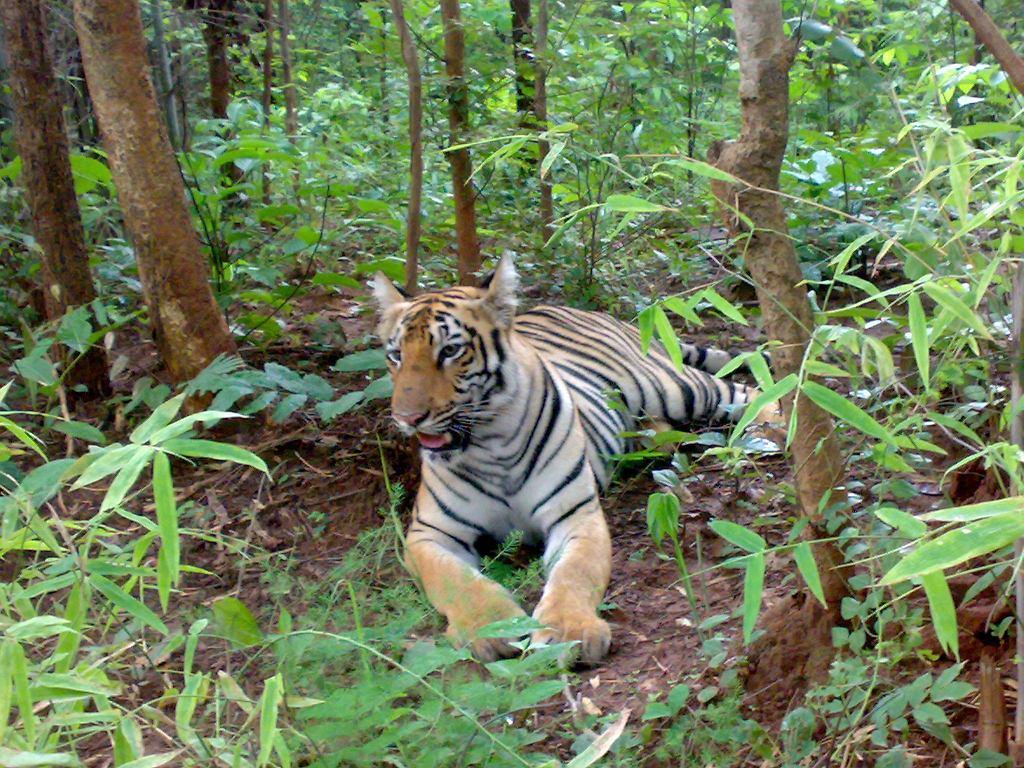 Tygrys (zdjęcie ilustracyjne)