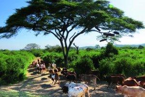 Intrygująca Etiopia - kraj karabinów i zaginionej arki