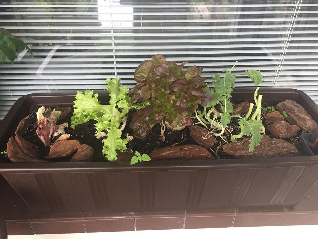 Ogródki balkonowe
