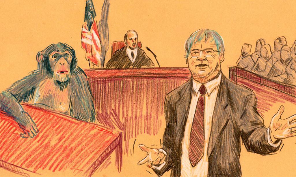 Szkic sądowy: Steven M. Wise broni swojego klienta.