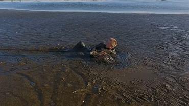 Orzeł bielik uratowany z bagna