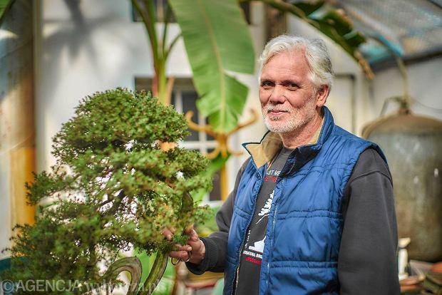 Zrobił biznes na bonsai. Sprzedaje drzewko za kilka tys. euro
