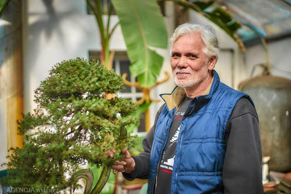 Zrobił Biznes Na Bonsai Sprzedaje Drzewko Za Kilka Tys Euro