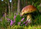 Najlepsze w Polsce: Kaszuby - kraina z okruchów gór i morskich kropli