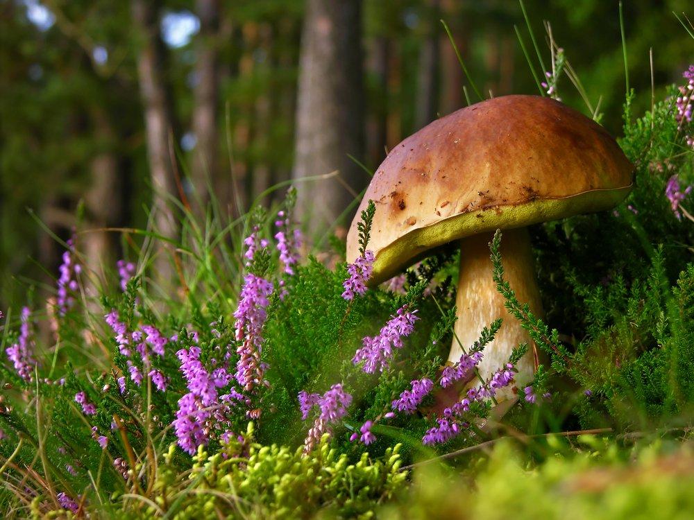 Kaszuby to raj dla grzybiarzy / Fot. Shutterstock