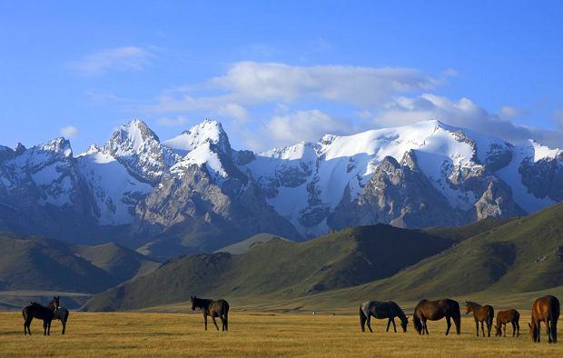 Kazachstan, Uzbekistan, Turkmenistan, Kirgistan, Tadżykistan. Kirgiz schodzi z konia 40 lat później