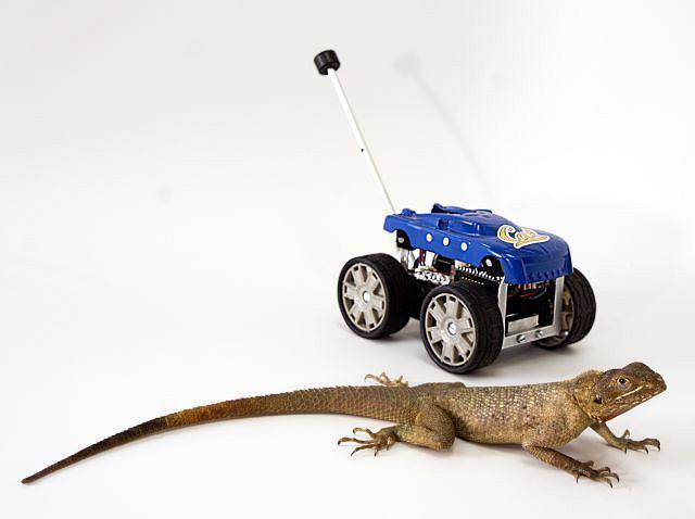 Jaszczurka i robot z ogonem