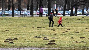 Strefa kibica zostanie wytyczona na krakowskich Błoniach