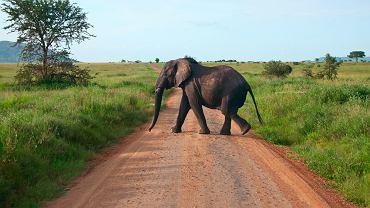 Kenia safari - Masai Mara