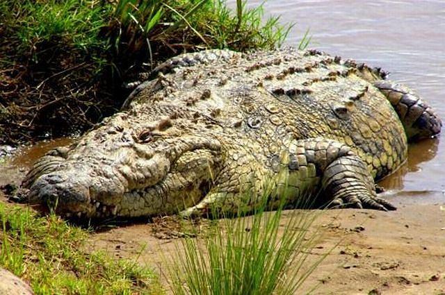 W samolocie był trochę mniejszy krokodyl Fot. sxc.hu
