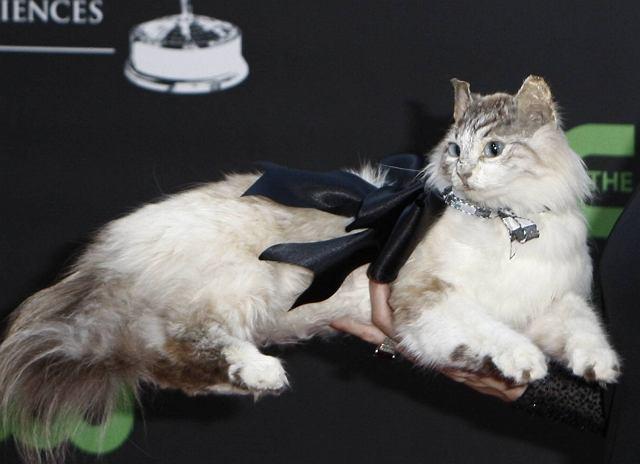 Pewnie mało kto kojarzy aktorkę Stacy Haiduk, ale na pewno wszyscy zauważyli jej niecodzienną torebkę z... wypchanego kota. Czegoś tak obrzydliwego dawno nie widzieliśmy. Nawet pomysły Lady Gagi przy tym wysiadają. Fuj!
