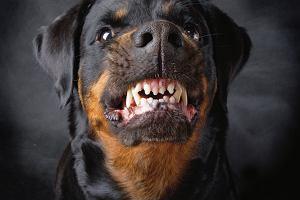 License to kill - jedenaście naprawdę groźnych psów