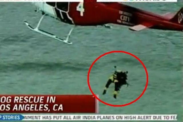 Akcja ratunkowa psa Fot. YouTube/CheneyWatch1
