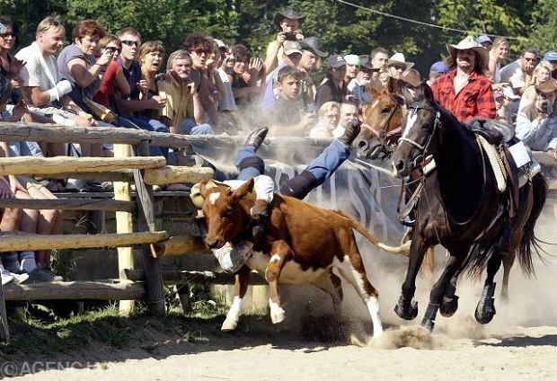 Mistrzostwa Western Rodeo, Ściegny k. Karpacza