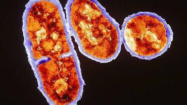 Propinibacterium acnes, sprawca trądziku