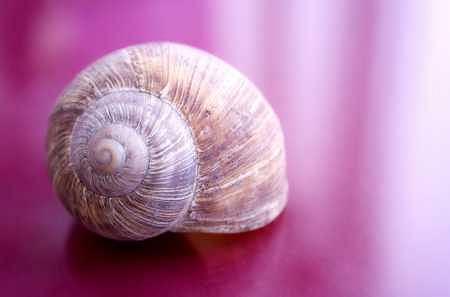 Symbolem Slow Life jest najpowolniejsze stworzenie - ślimak