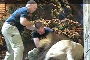 Lew zaatakował tresera.