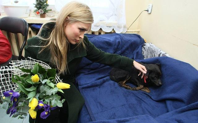 Miłość Joanny Krupy do zwierząt jest ogólnie znana. Gwiazda z własnej inicjatywy odwiedziła schronisko dla zwierząt w Kielcach. Modelka zadeklarowała, że chce pomóc w uratowaniu placówki, bo władze zamierzały zmienić jej lokalizację. Zobaczcie jak wyglądała wizyta Joanny w Kielcach.