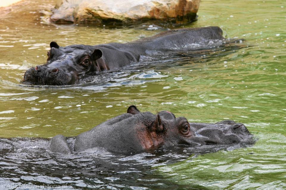 randki zoo