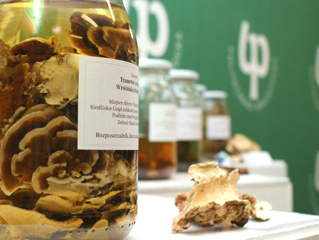 Badania nad korzeniowcem sosnowym