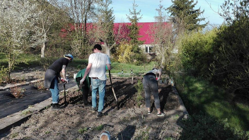 Jak dbać o ogród na wiosnę? Szpadel w ręce, kompost w glebę i do pracy
