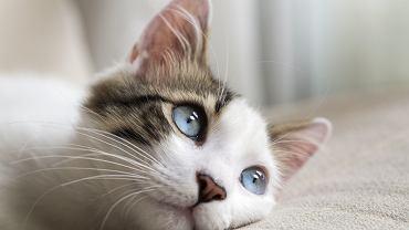Czy koty mogą się zakazić koronawirusem?