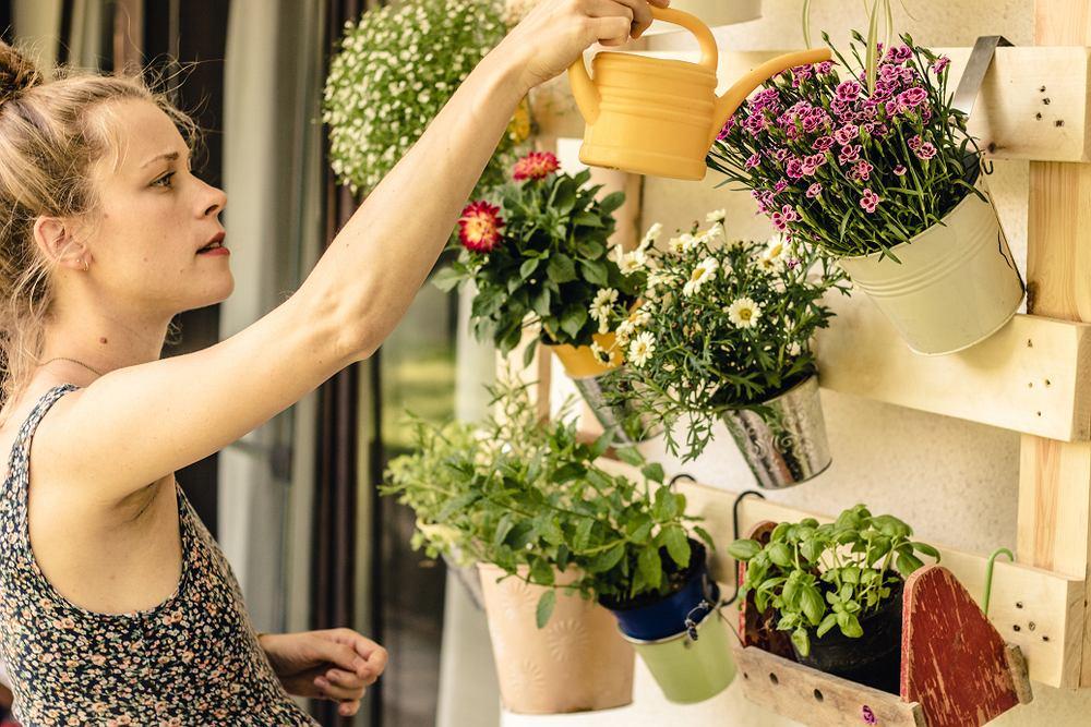 Rośliny i zioła balkonowe