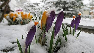 Kolejne uderzenie zimy w Polsce. Kiedy ocieplenie?