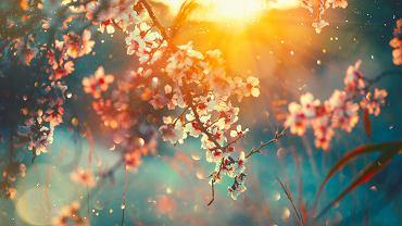 Przysłowia o wiośnie zazwyczaj związane są z pogodą. Zdjęcie ilustracyjne, Subbotina Anna/shutterstock.com