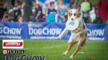 Dog Chow Disc Cup