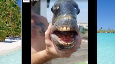 Ryba z 'ludzkimi' zębami