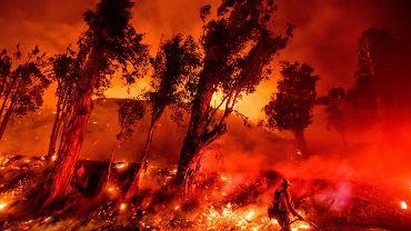 Kalifornia w ogniu katastrofy klimatycznej... Sześć z dziesięciu największych i najbardziej destrukcyjnych pożarów w historii nawiedziło ten stan w ostatnich kilku latach. Co roku rosną i trwają dłużej. Prezydent Trump nie daje wiary - w ramach profilaktyki pppoż. zaleca w lasach grabić liście 'jak Finowie' (ci mają ubaw, zalewając internet memami). Na zdjęciu: pożar 'Maria' pochłonął już ponad ponad 8 tys. akrów. Santa Paula w Kalifornii, USA, 1 listopada 2019 r.