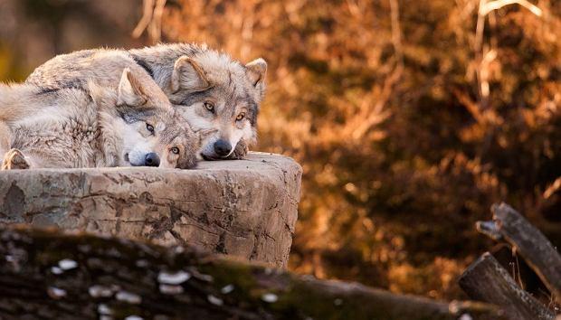 Polska jesienno-zimową porą: Podglądamy dziką przyrodę w Polsce