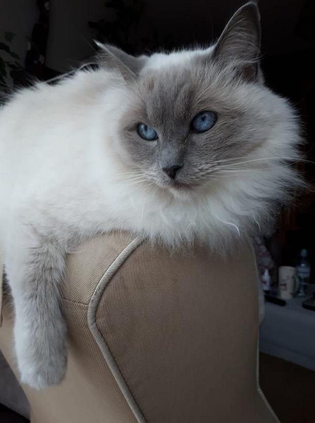 Zdjęcie numer 36 w galerii - Karmel, Daktyl, Kapitan Benny, Ptyś, Wiesław... Kochane i piękne - oto Wasze koty [GALERIA NA DZIEŃ KOTA]