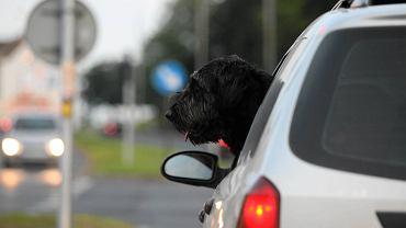 Z nieba leje się skwar, a oni zostawili psa w samochodzie i... poszli na kawę