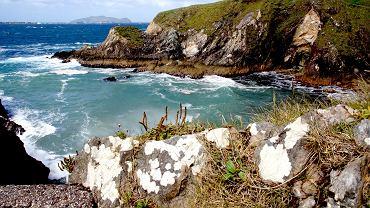 Dingle Coast, region w którym znajduje sie wyspa Great Blasket, zdj. ilu